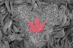 Сердце на сухих лист Стоковое Фото
