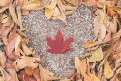 Сердце на сухих лист Стоковое Изображение RF
