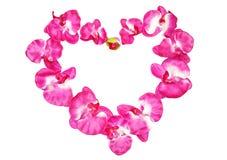 Сердце орхидей Стоковое Изображение