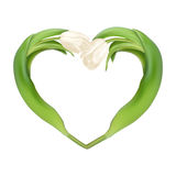 Сердце от 2 тюльпанов 10 eps Стоковое Изображение