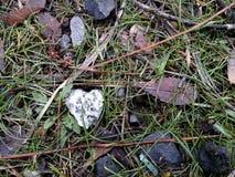 Сердце природы Стоковые Изображения RF