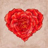 Сердце розы красного цвета Стоковые Изображения RF