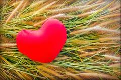 Сердце романтичной симпатичной валентинки красное на цветке травы для предпосылки влюбленности Стоковые Фото