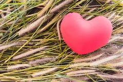 Сердце романтичной симпатичной валентинки красное на цветке травы для предпосылки влюбленности Стоковое Изображение