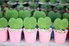 Сердце сформированное зеленых листьев Стоковое Изображение