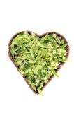 Сердце сформировало плетеную корзину при изолированное цветение дерева липы, Стоковая Фотография