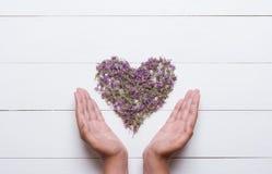 Сердце сделанное из тимианов при молодые руки держа его на белое деревянном Стоковые Фотографии RF