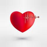 Сердце с сигналом EKG связанный вектор Валентайн иллюстрации s 2 сердец дня вектор Стоковое Изображение