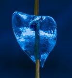 Сердце льда Стоковые Фото
