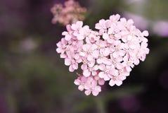 Сердце! Стоковые Фотографии RF
