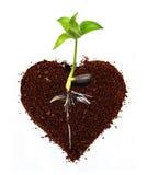 Сердце Coffe Стоковое Изображение RF