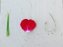сердце i u Стоковые Фото