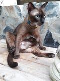 Сер-черный кот сидит на старом деревянном поле стоковое фото rf