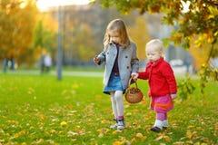 Сестры собирая жолуди для производить и играть Стоковое Фото