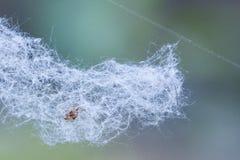 Сети паука, ватин, цветень весны, ватин летая стоковые изображения rf