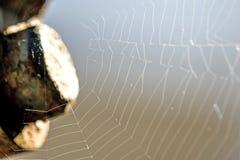 Сети паука в back-light Стоковые Изображения RF