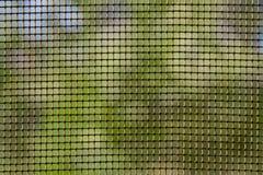 Сетка от комаров Стоковые Изображения RF