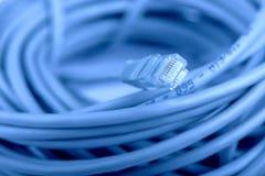 Сетчатый кабель RJ45 Стоковая Фотография RF