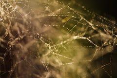 Сеть воодушевленности Стоковая Фотография RF