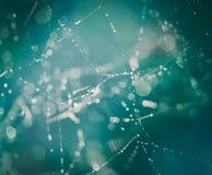 Сеть воодушевленности Стоковые Фотографии RF