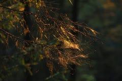 Сеть в заходе солнца стоковое фото rf