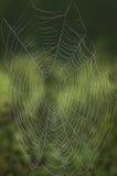 сеть зашнурованная росой Стоковая Фотография RF