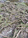 Сеть корня дерева, который подвергли действию элементы стоковые изображения