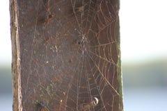 Сеть на серой предпосылке, доме и ловушке паука сеть ярких блесков в солнце, выживания измельченных резьб стоковое фото rf