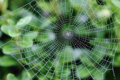 сеть паука влажная стоковая фотография