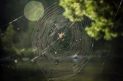Сеть паука в дереве Стоковое Изображение
