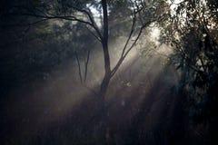 Сеть паука в лесе Стоковые Изображения RF