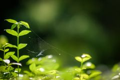 Сеть паука стоковые изображения rf