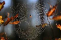 Сеть паука в лесе стоковое фото rf