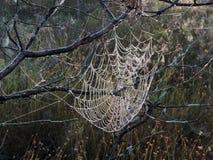 Сеть паука в росе утра, Литве Стоковая Фотография RF