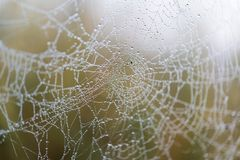 Сеть паука в утре Стоковое Фото