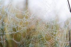 Сеть паука в утре Стоковые Фотографии RF