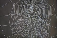 сеть паука заморозка Стоковое фото RF