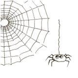 Сеть паука и спайдер Стоковое Фото