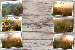 Сеть паука коллажа на заднем плане солнца Стоковые Фотографии RF