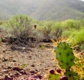Сеть паука конца-вверх Стоковое Изображение RF