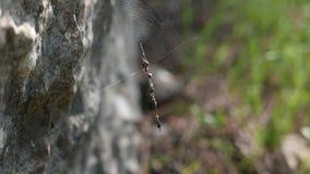 Сеть паука между камнями акции видеоматериалы