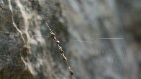 Сеть паука между камнями сток-видео