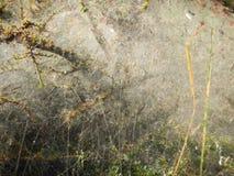 Сеть паука на ветви на кусте Стоковые Изображения RF