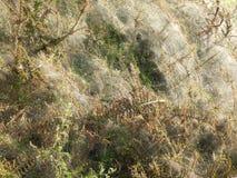 Сеть паука на ветви на кусте Стоковые Фото