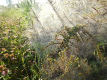 Сеть паука на ветви на кусте Стоковое Фото