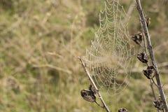 Сеть паука на заводе Стоковая Фотография