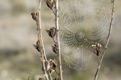 Сеть паука на заводе Стоковое Изображение