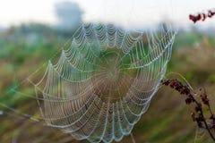 Сеть паука на заднем плане солнца Стоковая Фотография