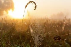 Сеть паука на заднем плане солнца Стоковые Фотографии RF