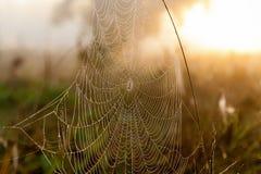 Сеть паука на заднем плане солнца Стоковая Фотография RF